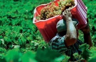 perspectivas comerciales para los vinos