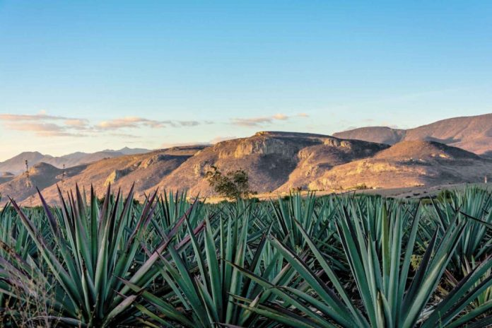 SLP promocionó sus Rutas del Mezcal en el Tianguis Turístico Digital -  Líder Empresarial