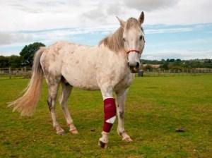 Equestrian Tips | Why do horse bones break?