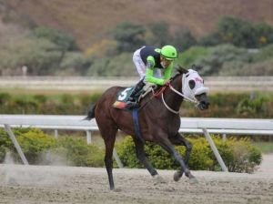 From Pedigree | Sandovalera for the second crown