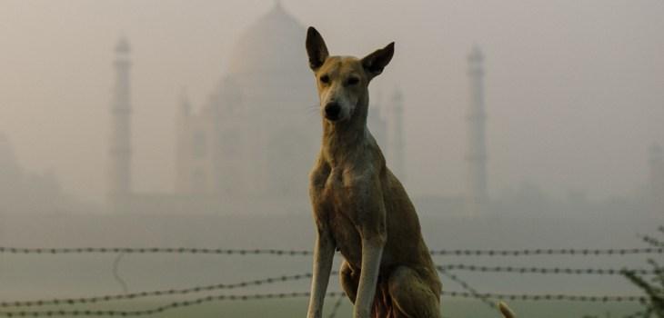 street photographers, street photography, Taj Mahal, travel, India, Leica M9, Agra