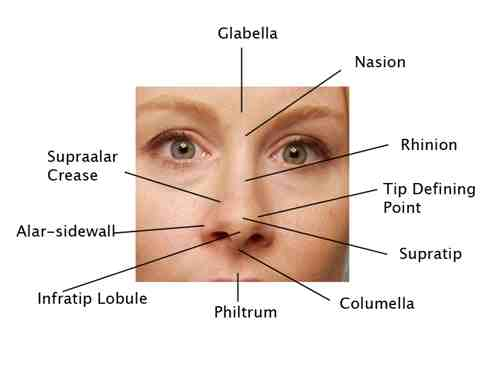 botox facial muscle diagram aprilaire 700 nest wiring anatomy | plastic surgery beverly hills lidlift