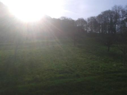 Ich liebe das Grün + die Morgensonne