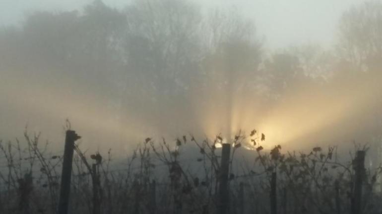 Auf dem Heimweg. Die Sonne blinzelt durch die Bäume und die Reben verlieren die letzten Blätter. MAGIC
