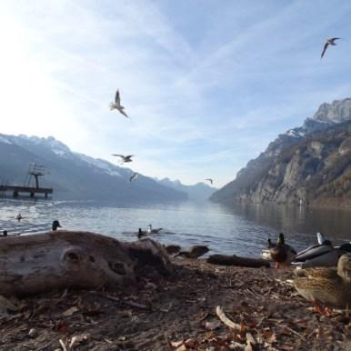 Dieser Platz am See ist im Sommer schön, im Herbst schön, im Winter schön - einfach immer.