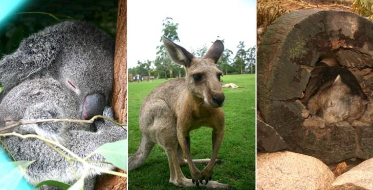 Australien Tiere