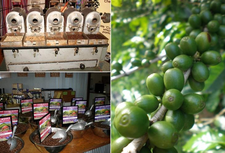 Kaffee-Plantagen