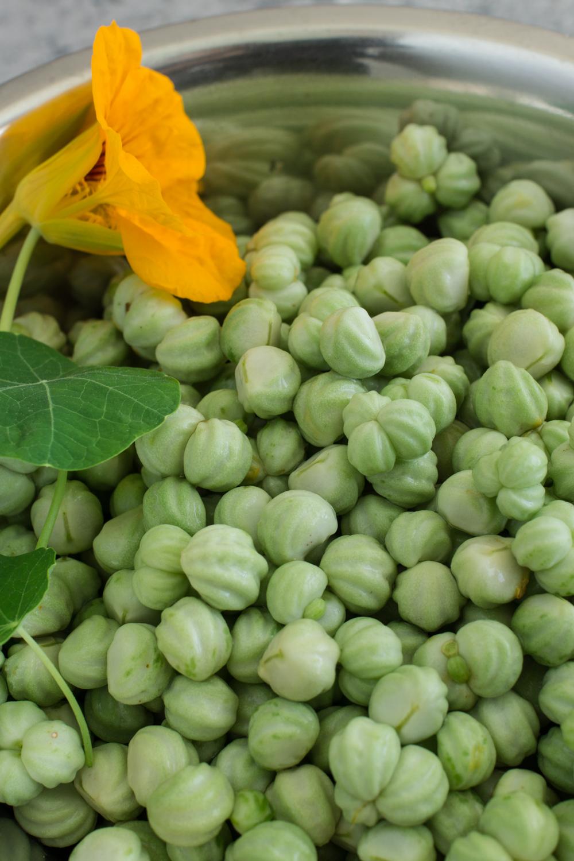 Kapuzinerkresse verarbeiten - Samen einlegen: falsche Kapern