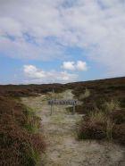 Naturschutzgebiet Lister Dünen