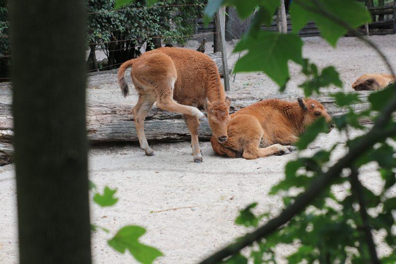 dieren in tierpark nordhorn