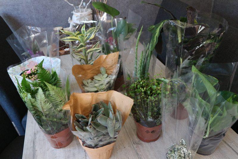 kneusjesbox, plantje,