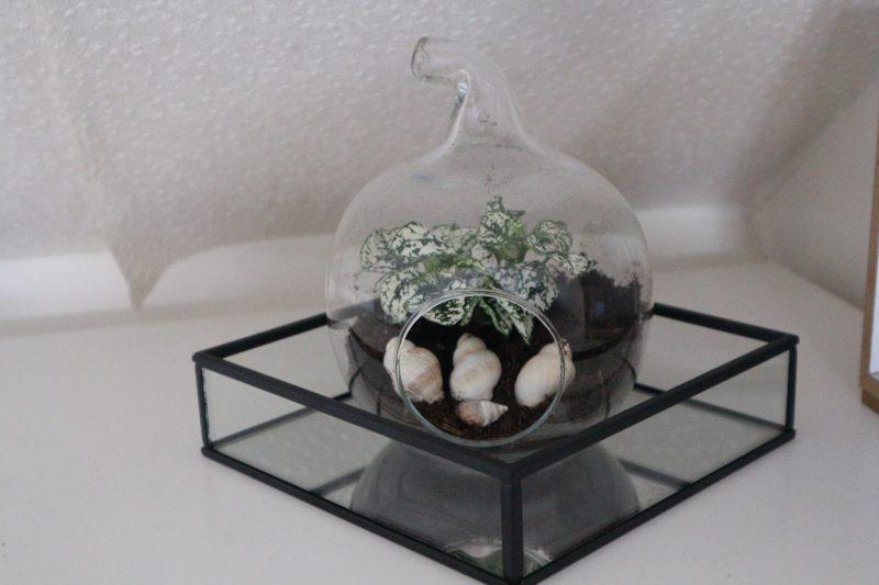 keusjesbox van plantje