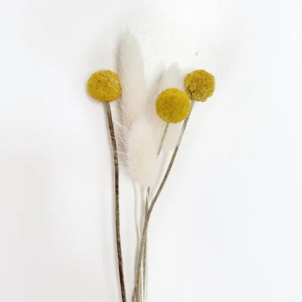 Craspedia en witte pluis bosje