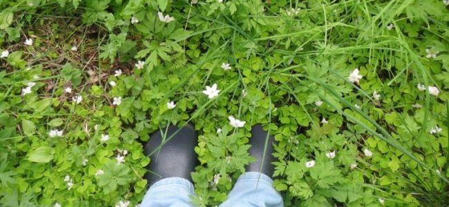 synchroonkijken,Zweden,2015,voeten,bosanemoontjes, vitsipporna