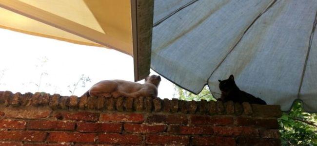 uit de zon, Pepijn en Pientje, Burmezen,juli 2015,tropisch