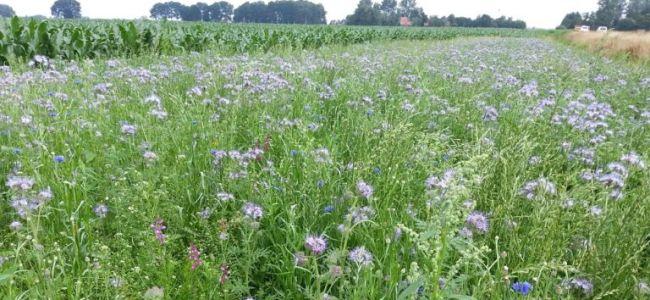 fietsen,Friesland,Bijenvoer,wilde bloemen,juli 2015