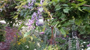 augustus,tuin,zomer,2015,blauwe regen