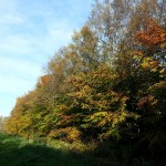 Friesland,herfst,Tynster bos,fietsen,2015