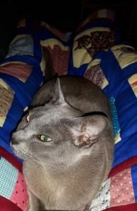 quilt,cat-quitl,verjaardag,cadeau,Burmezen,2016,poezen