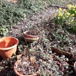 potten,biotoop,tuin,opruimen,april,2016