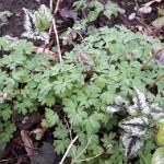 vogeltje-op-het-krukje,stinzeplant,voorjaar,tuin