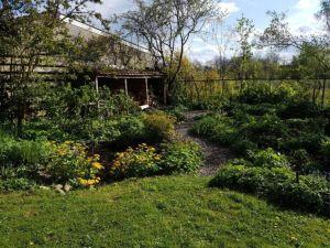 de tuin in april, alles begint voorzichtig