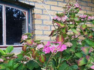 Nazomer, zomer, herfst, op Tjörn en in Friesland – overal Thuis