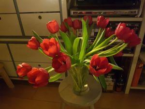 tulpen tijdens #Corvid19