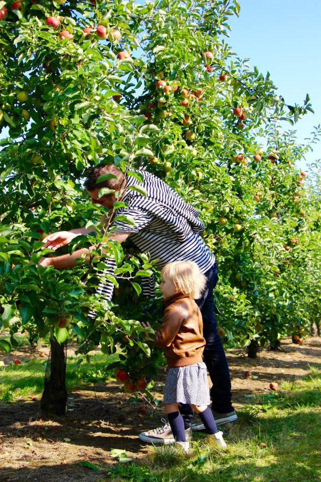 Plukdagen appel Fruithoeve Picard