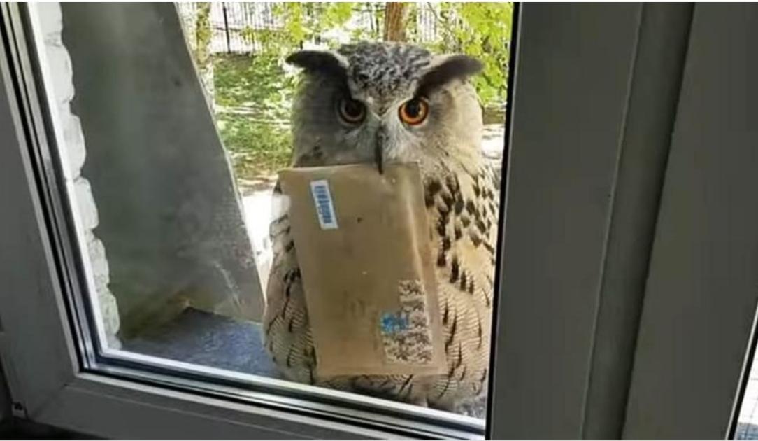 civetta che porta la posta