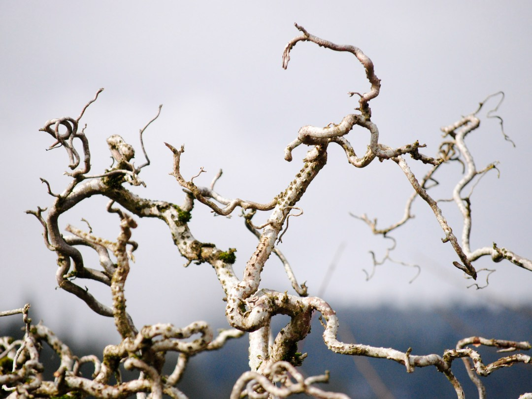 Reaching Twigs