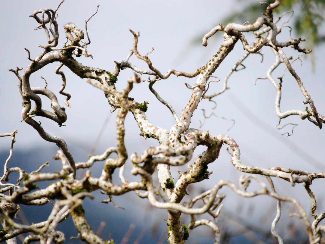 Curling Branches