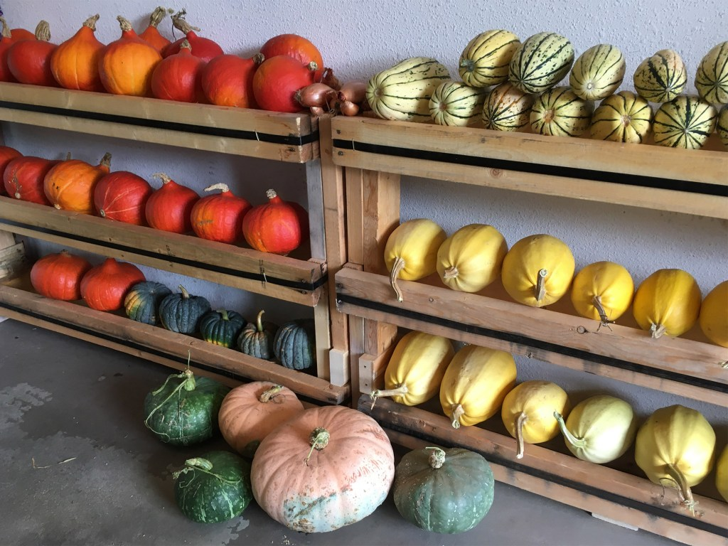 Squash stores for winter