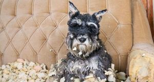 5-tips-to-help-dog-separation-anxiety