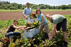New Hamburg Gem – Pfenning's Organic Farm