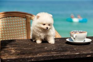 Dogs… AND Coffee? Sign us up!