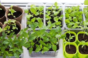 Get Your Garden Started: What to Plant in February!