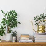 5 Best House Plants To Improve Your Air Quality