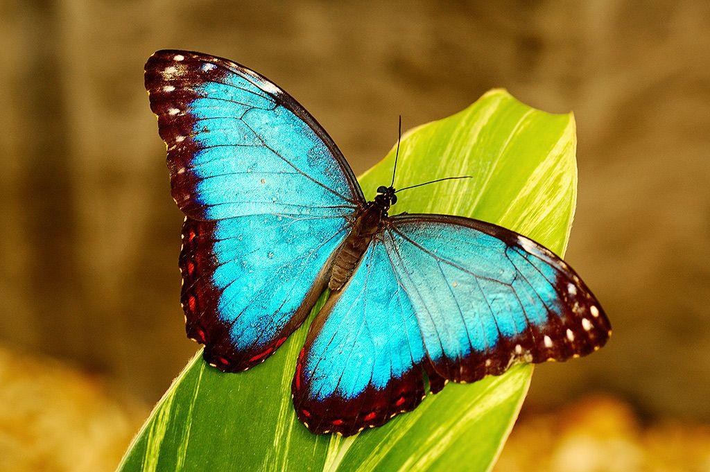 butterfly spirit animals