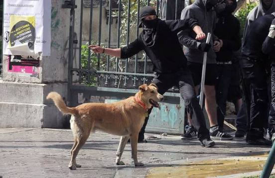 11-The Story of Loukanikos and Other Greek Riot Dogs