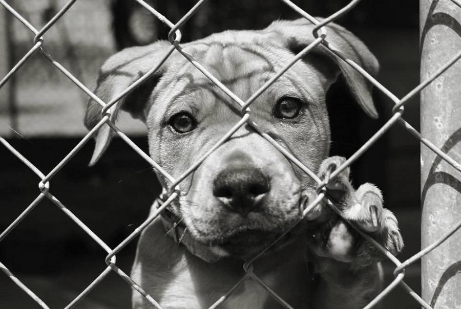 Reasons adopting a pet