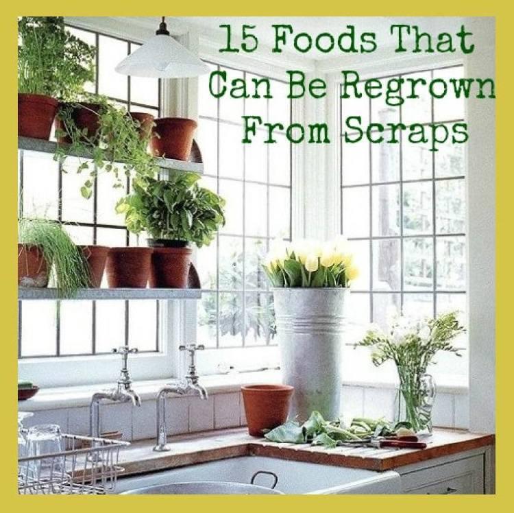 Foods Regrown From Scraps