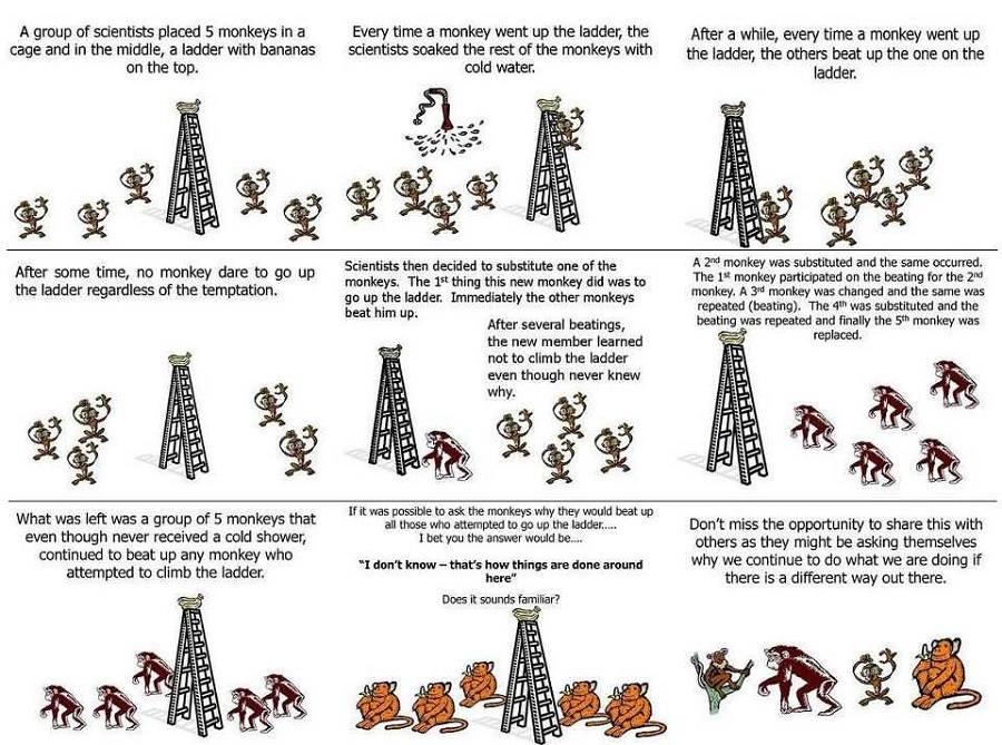 5 Monkeys Social Experiment