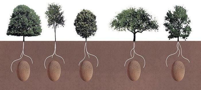 Organic Burial Pods