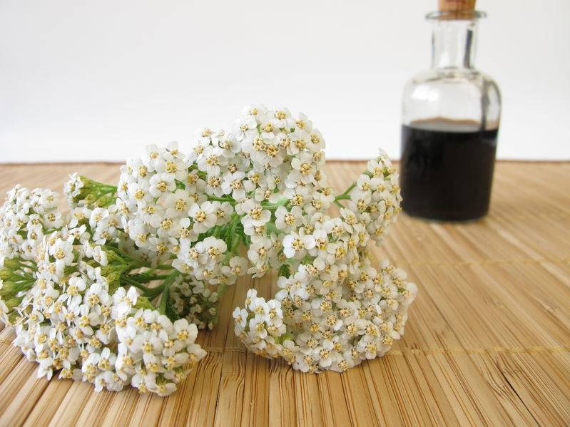 How to Make a Yarrow Insect Repellent