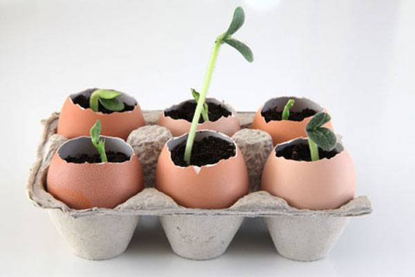 Raise your seedling from eggshells