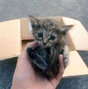 rescue-kitten-komari-ferret-brothers 51