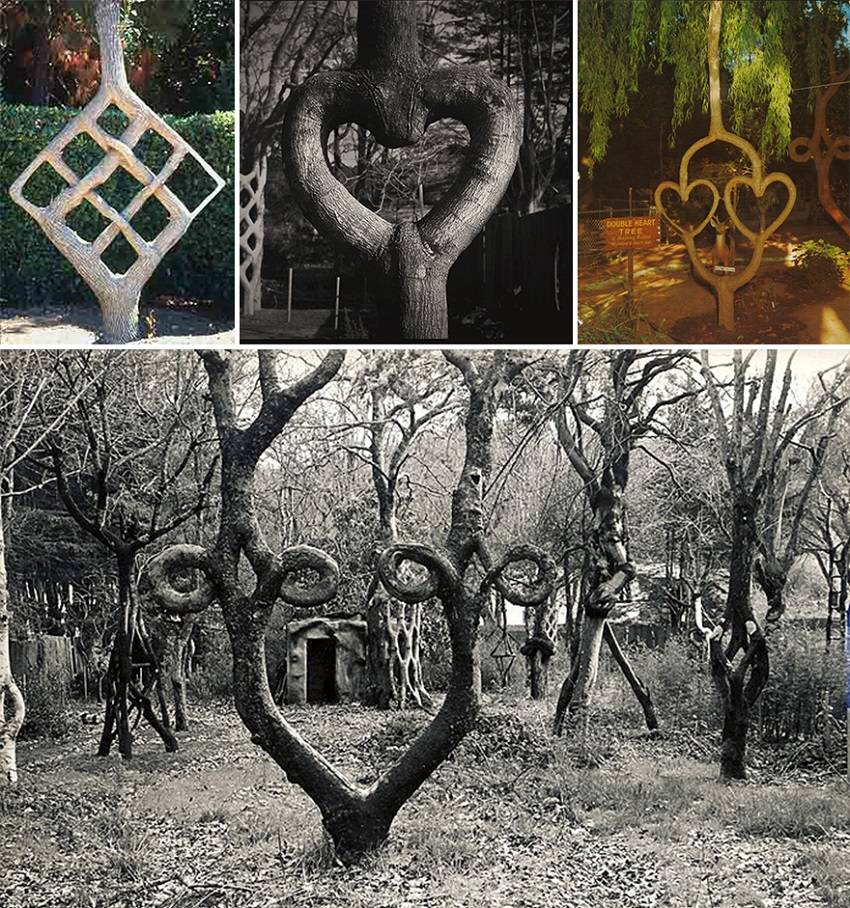 Stunning Sculptures out of Living Trees