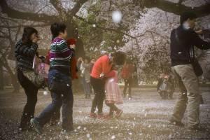 Sakura blizzard