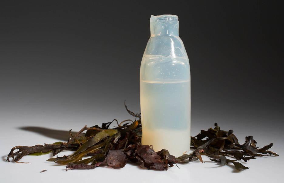 algae-water-bottle